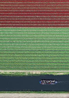 Campos de Tulipa na Holanda - Fotografias aéreas por Bernhard Lang;