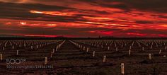 Sunrise over Farms by Inderwadhwa. Please Like http://fb.me/go4photos and Follow @go4fotos Thank You. :-)