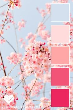 Spring Cherry Blossom Color Palette Blush Pink + Baby Blue, Shades of Pink Color Scheme, Color Palette: Spring Cherry Blossoms — Paper Heart Design color Spring Color Palette, Pastel Colour Palette, Colour Pallette, Spring Colors, Pastel Colors, Pastel Palette, Colours, Summer Color Palettes, Palette Art