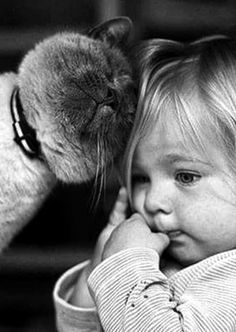 Keep calm & snuggle on Animals For Kids, Baby Animals, Cute Animals, Crazy Cat Lady, Crazy Cats, Video Chat, Photo Chat, Tier Fotos, Cat People