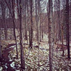 Morgan Creek trail. Marquette, #Michigan #MTB
