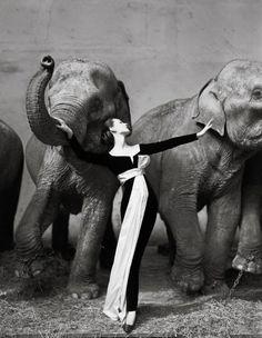 Dovima with Elephants, 1955