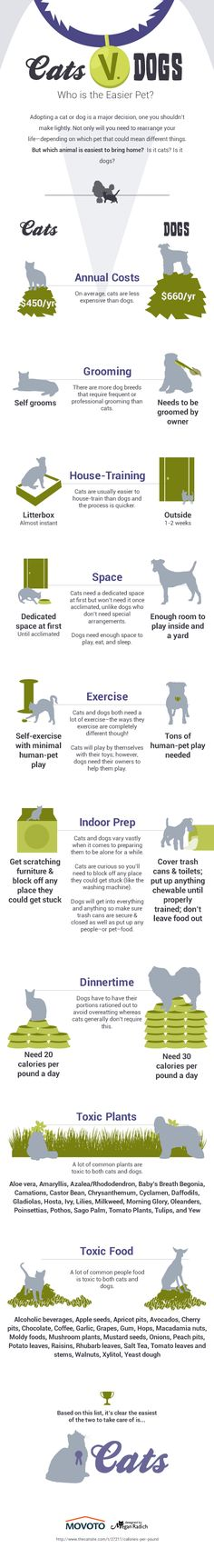 Cat Man Do | Dr. Arnold Plotnick: Cats vs Dogs - Who is the Easier Pet (Infographic)