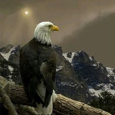 Follow @wildgeography for more amazing wildlife photos and animal nature photos @wildgeography The Eagle  Photo by Peter Holme iii #WildlifeFriend by wildlifefriend