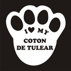 i love my coton de tulear