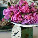 http://homeiswheretheboatis.net/2014/05/21/please-pass-the-peonies/