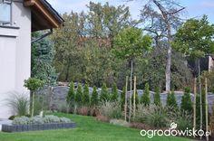 Lawendowy zawrót głowy - strona 915 - Forum ogrodnicze - Ogrodowisko