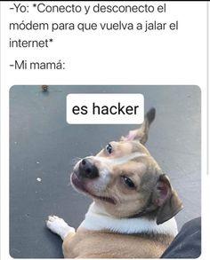 Funny Video Memes, Funny Relatable Memes, Funny Jokes, Funny Spanish Memes, Spanish Humor, Diva Quotes, Shawn Mendes Memes, Lion Art, Best Memes