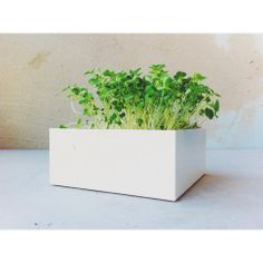 Life in a bag Microgreens rúcula by Chilli com Todos