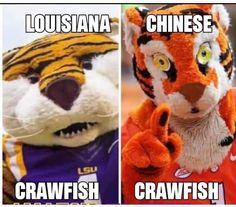 Lsu Tigers Football, Tiger Stadium, Dream School, Ole Miss, Team Player, Sports Humor, Louisiana, Funny Memes, Teddy Bear