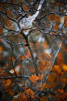 Nature gets ready for Halloween by JustABigGeek on Flickr.