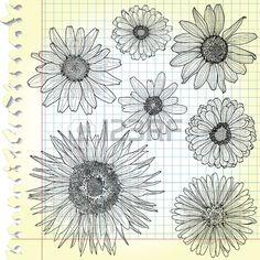 Schizzi Di Fiori Su Carta A Quadretti Clipart Royalty-free, Vettori E Illustrator Stock. Image 13598947.