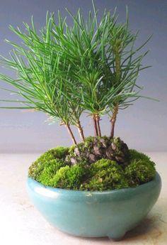Dishfunctional Designs: DIY Pine Cone Bonsai - How To Make A Pine Cone Bonsai