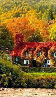 Autumn ~ Wales, United Kingdon