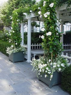 lovely arbor with benches & white mandevillea & white petunias