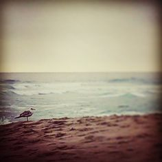 Hey, I found this really awesome Etsy listing at https://www.etsy.com/listing/165666533/lone-beach-bird-california-pacifica