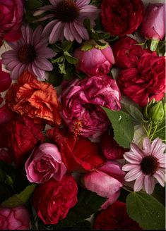pinks, reds & oranges / anna williams photography