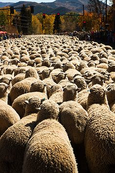 Trailing of the Sheep - annual festival in Idaho (October usually).  Would love to go to this one day. :)