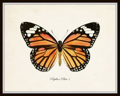 Tattoo, black butterfly tattoo, butterfly drawing, butterfly print, but Vintage Butterfly Tattoo, Monarch Butterfly Tattoo, Butterfly Tattoo Cover Up, Butterfly Tattoo Meaning, Butterfly Tattoo On Shoulder, Butterfly Tattoos For Women, Butterfly Drawing, Butterfly Tattoo Designs, Butterfly Design