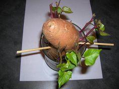 Se você possui um certo toque mágico com as plantas, pode fazer isso em casa e talvez nunca mais precise ir ao sacolão.