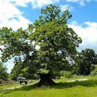 Uzun Ömürlü ağaçlar Plants, Plant, Planets