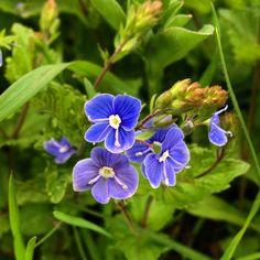Beauty Hacks, Beauty Tips, Garden, Plants, Garten, Beauty Tricks, Lawn And Garden, Gardens, Plant