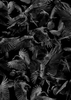Black Crows. Eclectic Subjects in Realistic Pencil Drawings. By Børge Bredenbekk.
