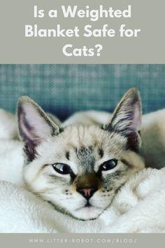 190 Cat Friendly Home Ideas In 2021 Cats Cat Furniture Cat Diy