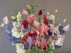 sweet pea, colours and stages