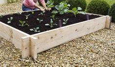 interlocking raised bed made from scaffolding boards