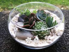 Low Bowl Terrarium- Jam packed Auckland, Terrarium, Packing, Decor, Terrariums, Bag Packaging, Decorating, Dekoration, Deco