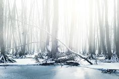 Cold forest | by 96dpi