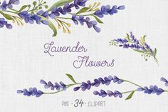 Watercolor set with Lavender Flowers ~ Illustrations on Creative Market