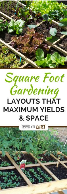 Learn everything you need to know about square foot gardening. Plus get free layouts to the best square foot gardening plans for high yields in small gardens. This is great for any gardener who is just starting a beginner vegetable garden and will help you plan, care for and harvest the most vegetables from your square foot garden. via @obsessedwithdirt