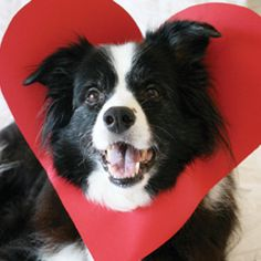 5 MInute DIY Valentines Day Dog Craft for photo