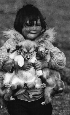 puppies! eskimos?