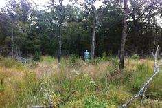 Cross Timbers management creates wildlife habitat