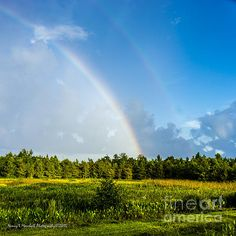 Green Cay Double Rainbow 2 photograph by Nancy L. Marshall - Green Cay Double Rainbow 2 Fine Art Prints and Posters for Sale #FineArtAmerica A beautiful double rainbow at Green Cay Wetlands, Boynton Beach, Florida.
