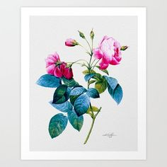 """Pink Rose, Flowers, roses, Large Giclee Print, floral digital painting 'Pink Roses"""" by Kathy Morton Stanion  EBSQ"""