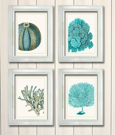Hey, I found this really awesome Etsy listing at http://www.etsy.com/listing/161794731/set-of-4-blue-coral-sea-urchin-prints