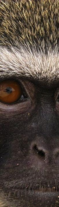 primate closeup ✿⊱╮
