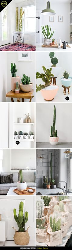 INSPIRATION | Potted Cactus