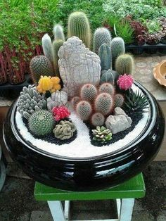27 beauty cactus and succulent garden ideas for indoorCreating a mini cactus garden. Trend: creating experience and being able to enjoy the material as well. Also terrarium sceneBeautiful Succulent Arrangement for a natural focal point.Colored sand n Succulent Arrangements, Cacti And Succulents, Planting Succulents, Cactus Plants, Garden Plants, Indoor Plants, House Plants, Planting Flowers, Cactus Cactus