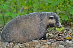 Badger to Death - Workplace Idioms - http://www.accentpros.com/2015/11/18/badger-to-death/