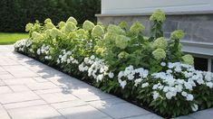 mass planting of these white flowers Front House Landscaping, Backyard Landscaping, Garden Landscape Design, House Landscape, Outdoor Plants, Outdoor Gardens, Outdoor Spaces, Scandinavian Garden, Hydrangea Landscaping