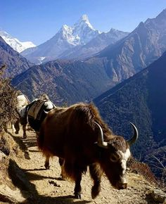 Everest Base Camp Trek via Arun Valley