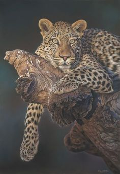 African Leopard. Pastel Painting.