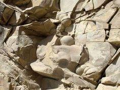 Hallan huevos fosilizados de dinosaurio en Rusia