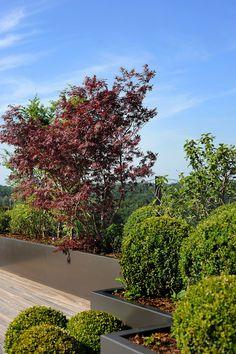 Terraza, Jardineras,Plantas con volúmenes y distinta coloración.