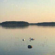Finland, Celestial, Bird, Outdoor, Animals, Instagram, Nature, Animales, Outdoors